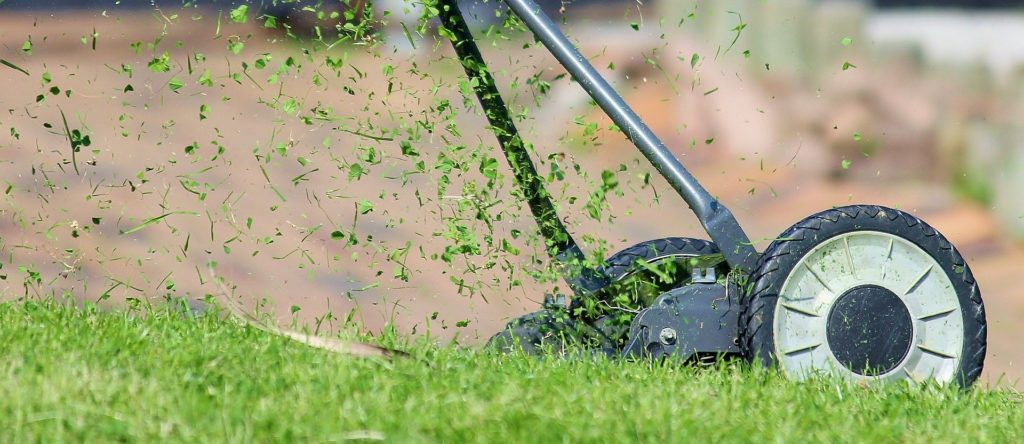 When is the best time to overseed a lawn